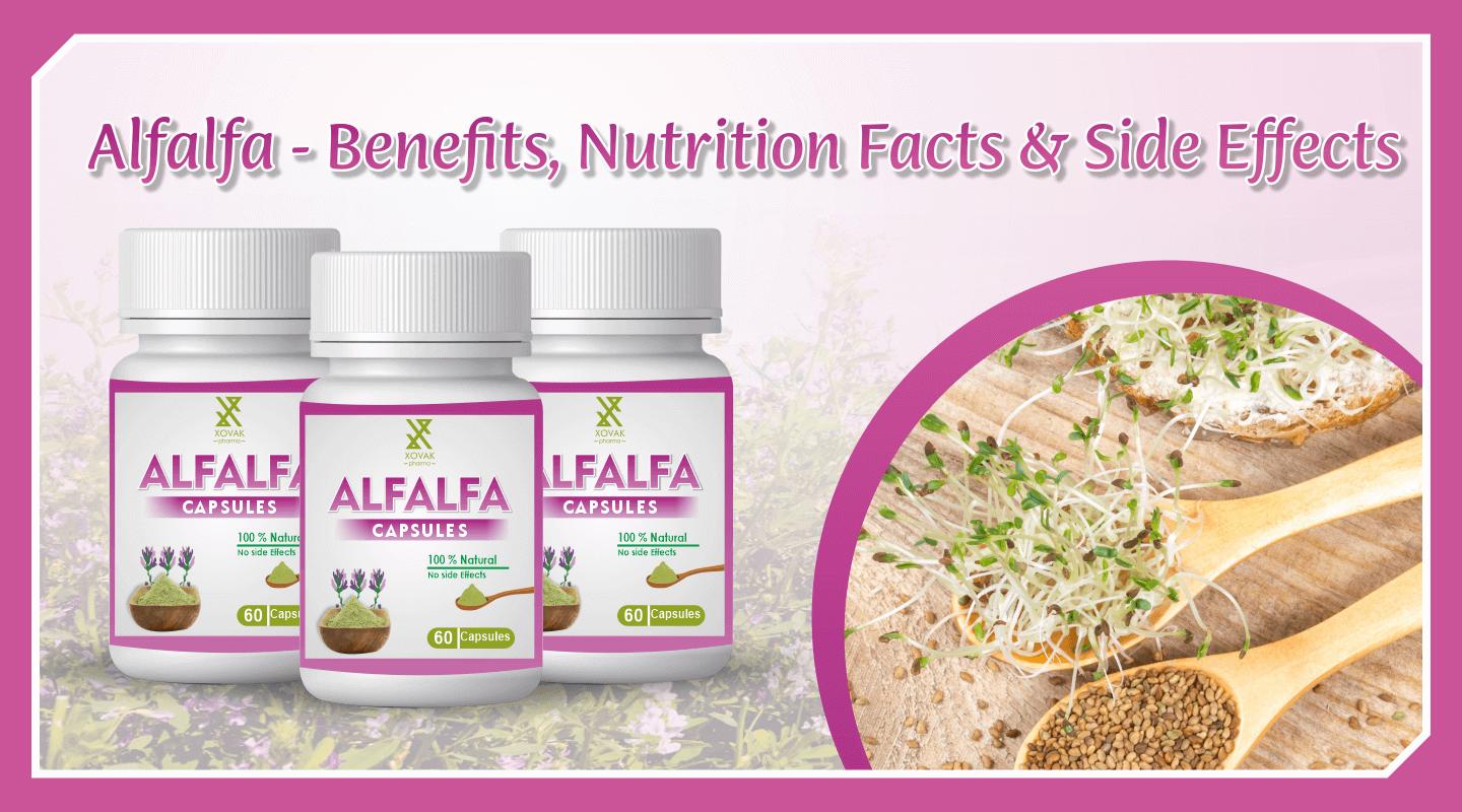 Alfalfa - Benefits, Nutrition Facts & Side Effects 4