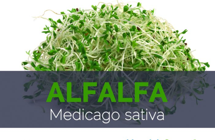 Alfalfa - Benefits, Nutrition Facts & Side Effects 8